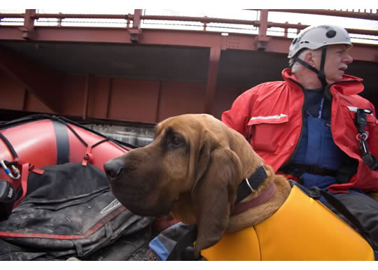 0FEMA_-_40687_-_Valley_Water_Rescue_member_and_his_search_dog_in_No-opt