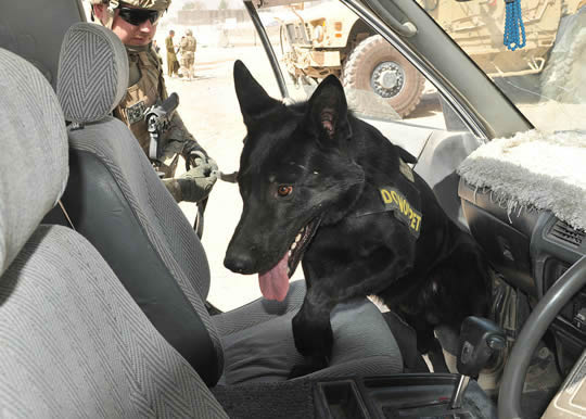 -Afghan,_ISAF_police_disrupt_narcotics_smuggling_with_help_from_hounds_121003-Z-NO327-202