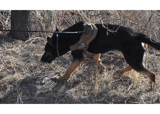 -Bliss_hosts_FORSCOM_military_working_dog_recertifications_120207-A-CJ175-040