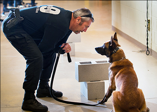 -Jacksonville_Sheriff's_Office_Officer_with_police_dog